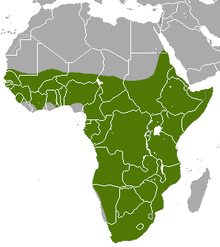 A map showing the distribution of the aardvark within Africa.