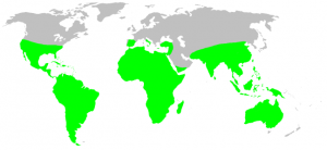 A world map showing the approximate distribution of tarantulas.