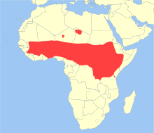 A map showing the distribution of the olive baboon marked in red.