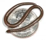 A photo of a Barbados Threadsnake on an American quarter coin.