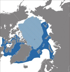 A map showing the distribution of the Narwhal.