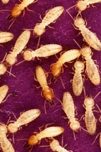 A group of termites