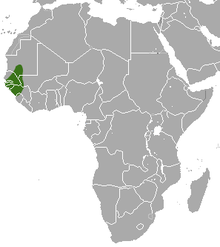 A map showing the distribution of the Guinea baboon.