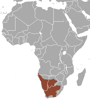 A map of Africa showing the range of the meerkat.