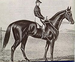Archer - First winner of the Melbourne Cup