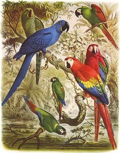 A painting featuring many species of macaw.