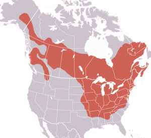 A map showing the distribution of the groundhog.